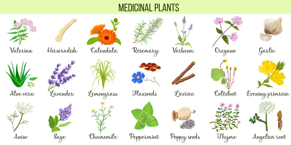 Common plants used in homeopathy remedies